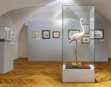 Výstava SUDÁN 1911